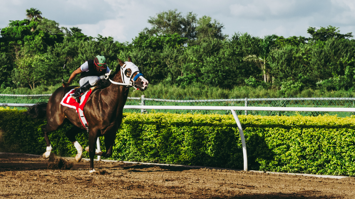 Horse Racing to Represent Betting