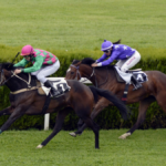 Where to Get Your Horse Racing Tips!