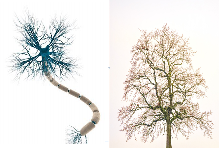 A picture of a neuron and a tree against a plain background. . They look very similar.