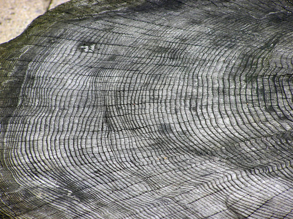A picture of a tree trunk with it's rings. It's in black and white, just like the fingerprint above is.